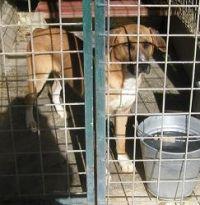 Il problema dei canili e i cani abbandonati in Italia, un'altra emergenza nazionale