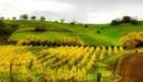TeamWorking propone il team building in fattoria: ecologico e rilassante!