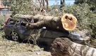 Nubifragio a Firenze: oltre 300 alberi caduti, pompieri e volontari al lavoro - La Repubblica